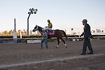 John Velasquez and Palace Malice wait for owner of Dogwood Stables, Cot Cambell to lead them into the winners circle after winning the Gulfstream Park Handicap (G2). Gulfstream Park, Hallandale Beach Florida. 02-08-2014