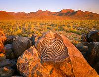 Hohokam Petroglyphs, prehistoric rock art from 300 to 1,450 AD on large boulders, and saguaro cactus, Carnegiea gigantea, Signal Hill, Tucson Mountains in background, at sunset, Sonora Desert, Saguaro National Park, Arizona, USA