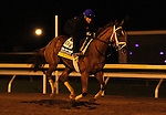October 25, 2015:  Curalina, trained by Todd Pletcher, and owned by Eclipse Thoroughbred Partners, is cross entered in the Breeder's Cup Longines Distaff Grade 1 $2,000,000 or the Breeder's Cup Filly & Mare Sprint $1,000,000.  Candice Chavez/ESW/CSM