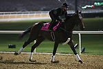 March 25, 2021: UAE Derby contender El Patriota trains on the track for trainer Antonio Cintra at Meydan Racecourse, Dubai, UAE.<br />