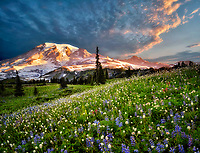 Wildflowers and Mt. Rainie. Mt. Rainier National Park, Washington