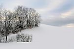 Winter Trees on a Snow Covered Hill Pasture in Afternoon Light in Rural Walpole, New Hampshire