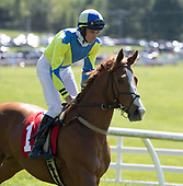 6th Maiden Hurdle - Withoutdestination