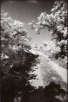 Dirt road through woods<br />