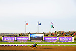 November 5, 2020: Owendale, trained by trainer Brad Cox, exercises in preparation for the Breeders' Cup Dirt Mile at Keeneland Racetrack in Lexington, Kentucky on November 5, 2020. Jon Durr/Eclipse Sportswire/Breeders Cup