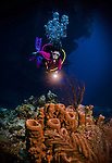10 June 2014:: SCUBA diver Sally Herschorn explores a cluster of sponges in front of Ghost Mountain, off the North Shore of Grand Cayman Island. Located in the British West Indies in the Caribbean, the Cayman Islands are renowned for excellent scuba diving, snorkeling, beaches and banking.  Mandatory Credit: Ed Wolfstein Photo *** RAW (NEF) Image File Available ***