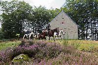 """Europe/France/Normandie/Basse-Normandie/50/Saint-Clément-Rancoudray: Randonnée équestre avec l'association Cheval Nature du Sud Manche  dans le Parc naturel régional Normandie-Maine à la chapelle de Monfort <br /> Àuto N°:  2012-431 , Àuto N°:  2012-432, Àuto N°:  2012-43"""", Àuto N°:  2012-434; Àuto N°:  2012-435 // urope/France/Normandie/Basse-Normandie/50/Saint-Clément-Rancoudray:  Horseback Riding, Normandie-Maine Regional Natural Park"""