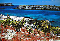 Rochas vulcânicas do arquipélago de Galápagos. Equador.<br /> Foto de Juca Martins.<br /> Data: 1996