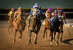 HALLANDALE FL - FEBRUARY 27: Mohaymen #6, ridden by Junior Alvarado battles with Zulu #2, ridden by John R. Velazquez off the turn en route to winning the Xpressbet.com Fountain of Youth Stakes at Gulfstream Park on February 27, 2016 in Hallandale, Florida.(Photo by Alex Evers/Eclipse Sportswire/Getty Images)