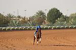 Track Work: February 19 2021: SPACE BLUES (IRE) Track work from King Abddulaziz Racetrack, Riyadh, Saudi Arabia. Shamela Hanley/Eclipse Sportswire/CSM FEBRUARY 19 2021: The Saudi Cup Preparations.