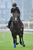 7 December 2017, Hong Kong - Poet's Word during track work prior to the Longines Hong Kong International Races at Sha Tin Racecourse in Hong Kong. Photo Sydney Low