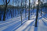 Sentier des Caps dans la région de Charlevoix.. Ici, le bouleau jaune ou merisier, emblème du Québec fait son apparition. Quebec en hiver. Canada