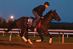 Gretzky The Great, trained by trainer Mark E. Casse, exercises in preparation for the Breeders' Cup Juvenile Turf at Keeneland Racetrack in Lexington, Kentucky on November 1, 2020. /CSM