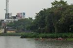 Great Egret (Ardea alba) group and Intermediate Egret (Ardea intermedia) in urban wetland during rainfall, Diyasaru Park, Colombo, Sri Lanka