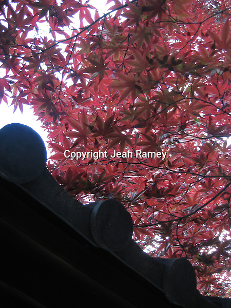 Crimson leaves forma  canopy over a small Geisha temple in Gion - Kyoto