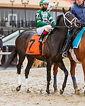 OZONE PARK, NY -JANUARY 02, 2017:Win With Pride in post parade for the Grade 3 Jerome Stakes for 3 year olds, at Aqueduct Racetrack, January 2, 2017 . (Photo by Sue Kawczynski/Eclipse Sportswire/Getty Images)