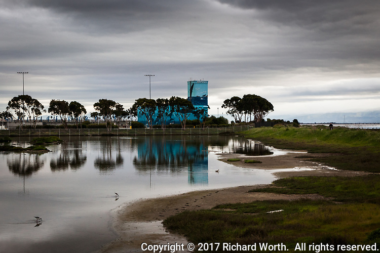 Whale murals on a water treatment plant reflect in an adjacent pond where Black-necked stilts feed under a threatening sky.  The scene at the intersection of San Lorenzo Creek Trail and the Bay Trail, along San Francisco Bay.