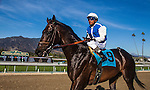 Silentio, ridden by Rafael Bejarano after the Franke E. Kilroe Mile Stakes (G!) at Santa Anita Park on March 8, 2014 in Arcadia, California. (Photo by Evers/Eclipse Sportswire)\