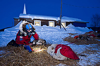 Paul Gebhart boots his dogs in front of the Ruby Bible Church shortly after sunset as he prepares to leave the Ruby checkpoint during the 2010 Iditarod