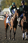 Gio Ponte with Ramon Dominguez up after winning The Shadwell Turf Mile at Keeneland Race Course. 10.09.2010..photo Ed Van Meter