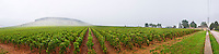 vineyard corton and c-charlemagne vyd aloxe-corton cote de beaune burgundy france