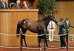 September 15, 2015: Hip 277 Distorted Humor - Forest Music colt consigned by Taylor Made Sales, became the session sell topper when sold for $1,525,000.  Candice Chavez/ESW/CSM