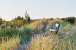 View Bench in Sand Dunes, Grayland Beach, State Park, Tokeland Beach, on the central Washington Paciific Coast south of Westport