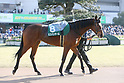Horse Racing: Kyoto Hinba Stakes at Kyoto Racecourse
