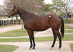 10  November  2009 Fasig TIpton November Breeding Stock sale.  Hip #23 Sugar Shake, consigned by Adena Springs, sold for $825,000 to Bowden Global Bloodstock.  She is in foal to Bernardini.
