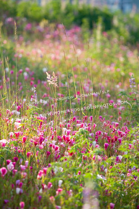 early morning sunlight illuminates blooming native wildflowers in the Meadow portion of the sculpture park.