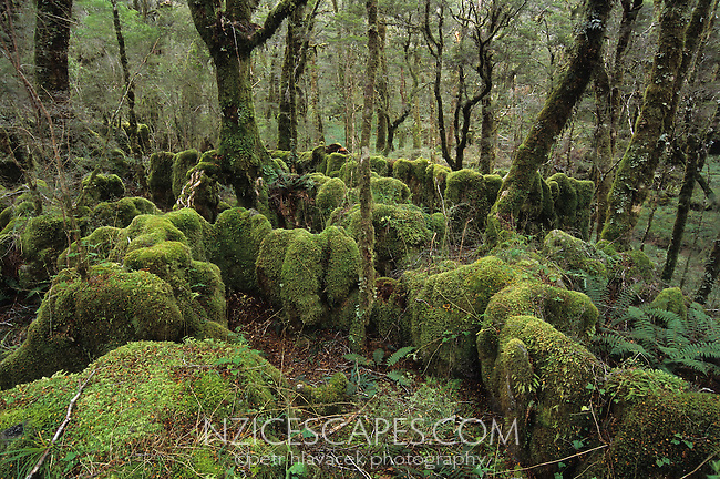 Moss cloaked boulders and trees near a Gouland Downs Hut on the Heaphy Track - Kahurangi National Park, New Zealand
