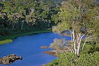 Vegetação de Mata Atlântica. Itabuna. Bahia. Foto de Zaida Siqueira.