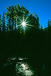 Sun flares through trees near nightfall.