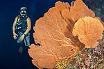 Dive guide by giant orange sea fan