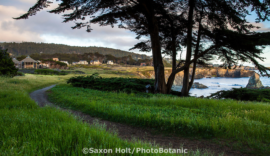 The Bluff Trail in front of homes at The Sea Ranch