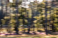 #77 DEMPSEY-PROTON RACING - Porsche 911 RSR - 19: Christian Ried - Jaxon Evans - Matt Campbell - Michael Fassbender, 24 Hours of Le Mans , Test Day, Circuit des 24 Heures, Le Mans, Pays da Loire, France