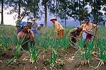 Indonesia (Film, 2002)
