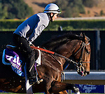 Medal Count, trained by Dale Romans, trains for the Breeders' Cup Juvenile at Santa Anita Park in Arcadia, California on October 31, 2013.