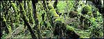 forêt primaire du kilimandjaro