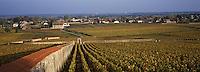 """Europe/France/Bourgogne/21/Côte d'Or/Puligny-Montrachet: Le vignoble du Clos """"les Pucelles"""""""