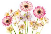Gerbera and Hellebore bouquet