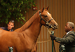 12 September 2010.  Hip #8 First Samurai - Aldebaran Light filly, sold for $525,000 at the Keeneland September Yearling Sale.  Consigned by Woods Edge.