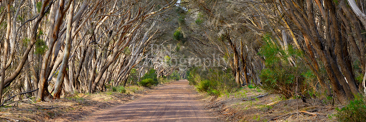 Took this photo on the road to Duck Lagoon on Kangaroo Island at magic hour that special  time of the afternoon on KI