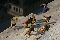 Monkeys, roaming the Pashupati Templs and cremation area Kathmandu, Nepal