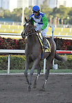 31 January 2009: Nicanor gallops back after running in his first race  (he finished a disappointing 11th) in a maiden race at Gulfstream Park in Hallandale, Florida.