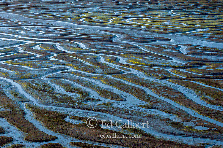 Low Tide Detail, Drakes Estero, Point Reyes National Seashore, Marin County, California