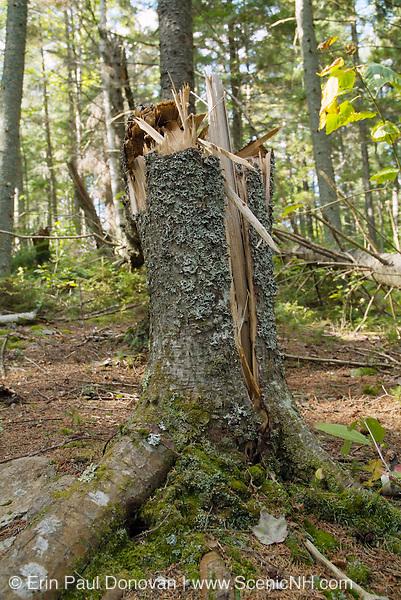 Close-up of an Broken Tree Trunk.