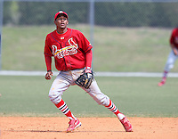 March 19, 2010:  Shortstop Yunier Castillo of the St. Louis Cardinals organization during Spring Training at the Roger Dean Stadium Complex in Jupiter, FL.  Photo By Mike Janes/Four Seam Images