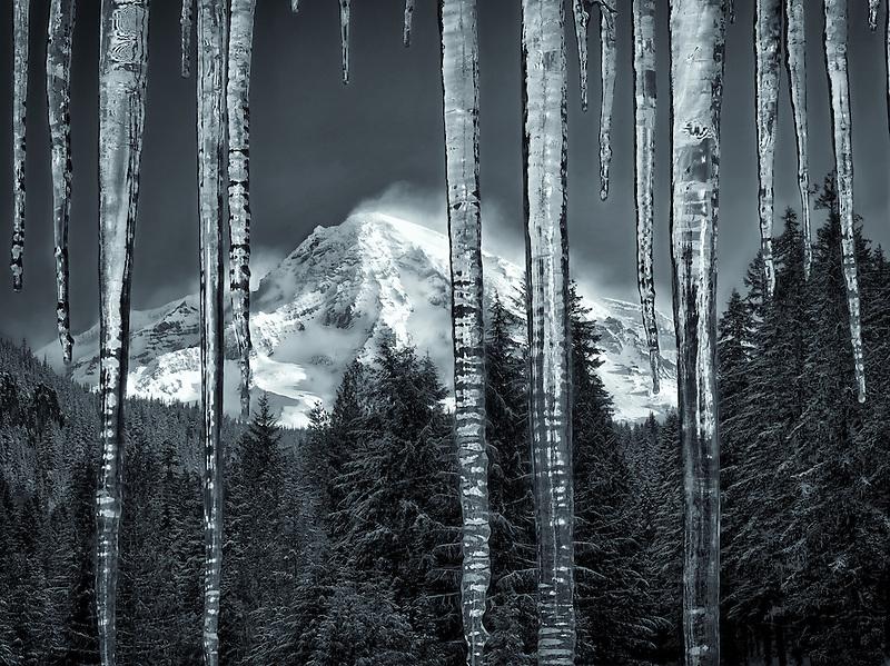 Icicles and Mt. Rainier. Mt. Rainier National Park, Washington
