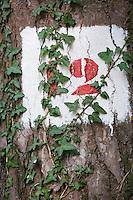 Europe/France/Bretagne/35/Ille et Vilaine/Paimpont: Forêt de Paimpont, mythique Brocéliandre -détail tronc d'arbre et marque